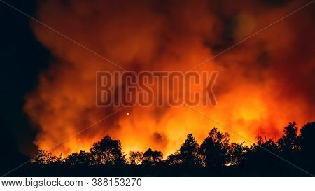 Forest Fire At Night, Wildfire After Dry Summer Season, Burning Nature.