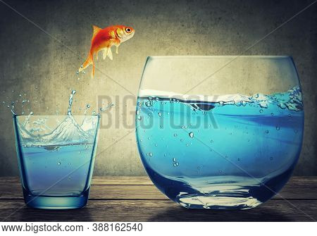 Goldfish Jumping Out From One Small Glass Cup To Another Bigger Fishbowl Aquarium With Clear Water O