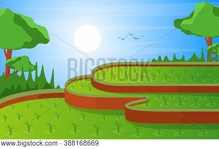 Asian Vietnam Bali Terraced Rice Field Paddy Plantation Illustration