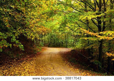 Mountain road in autumn colours