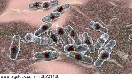 Spore-forming Bacteria Clostridium, The Causative Agent Of Tetanus, Botulism, Gas Gangrene And Pseud