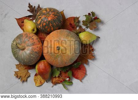 Autumn Harvest: Pumpkins, Pears, Viburnum And Multicolored Leaves On Gray. Thanksgiving Day. Top Vie
