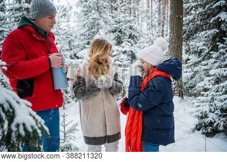 Hot Tea In A Thermos In The Winter Forest. A Wonderful Active Holiday For The Whole Family In A Coun