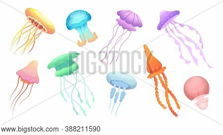 Jellyfish. Underwater Wild Animals Beautiful Colored Group Of Jellyfishes Vector. Illustration Jelly