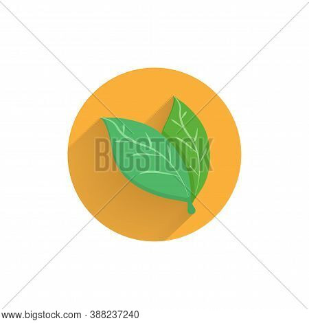 Bay Leaves Colorful Flat Icon With Long Shadow. Bay Leaves Flat Icon