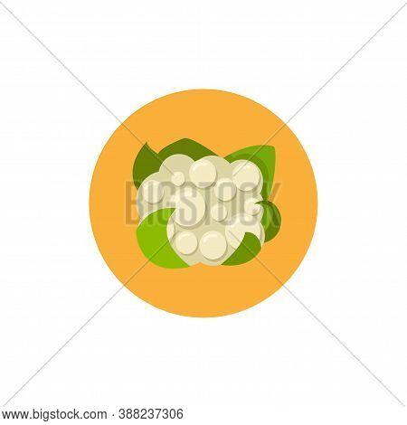 Cauliflower Colorful Flat Icon With Long Shadow. Cauliflower Flat Icon