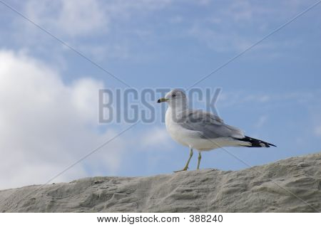 seagull on a sandy cliff poster