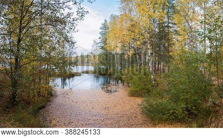 Panoramic Landscape Of A Forest Lake Backwater Covered With Golden Birch Leaves With Trees And Bushe