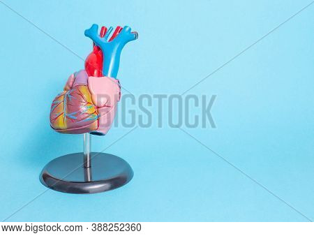 Anatomical Model Of The Human Heart On A Blue Background. Healthy Heart And Heart Disease Concept, C