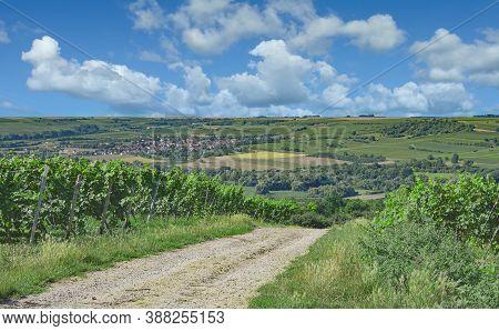 Vineyard Landscape In Rhinehessen Wine Region In Rhineland-palatinate,germany