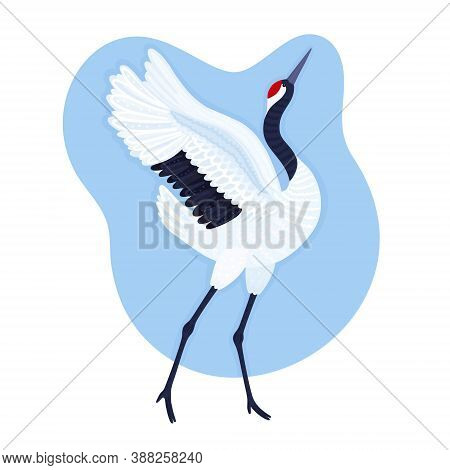 Red Crowned Crane. Endangered Species. Blue Background With Dancing East Asian Bird. Card, Print On