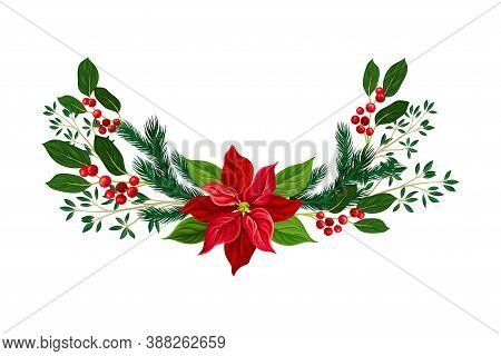 Evergreen Coniferous Tree Branches And Euphorbia Flower Semicircular Vector Composition