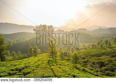 Tea plantations in Munnar at sunset in Kerala, India
