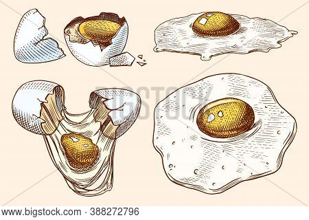 Eggs And And Yolk, Scrambled Omelette, Shell And Farm Product. Engraved Hand Drawn Vintage Sketch. W