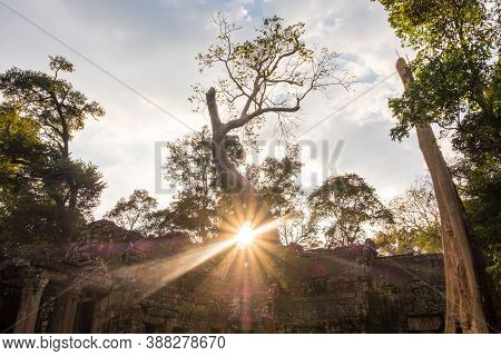 Beautiful Sunset At Ta Prohm Temple, One Of Angkor's Best Visited Monuments. It Is Known For The Hug