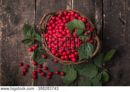 Red Berries Of Fresh Hawthorn In The Basket Standing On A Wooden Table. Copy Space.small Pile Of Har