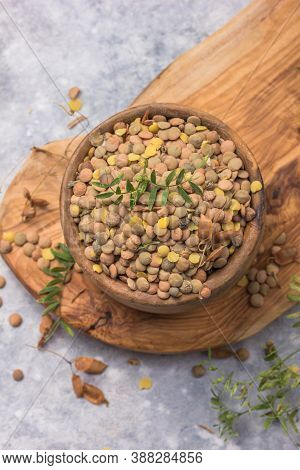 Uncooked  Lentil Legumes, Herbaceous Plant (lens Culinaris) In Bowl. Lentils In Wooden Spoon On Wood