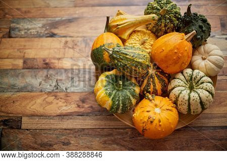 Decoration made from small pumpkins. Colored pumpkins in different varieties. Halloween pumpkins placed on a wooden table.