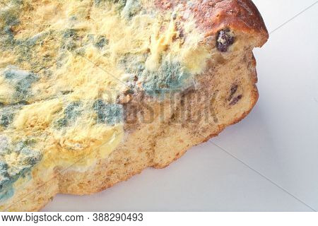 Mold Fungus On Pie. Moldy Pie Closeup. Fungi On Bread. Food With Mildew.