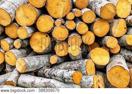 Chopped Dry Firewood At The Countryside. Stock Pile Of Timber, Chopped Down Trees. Preparation Of Fi