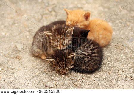 Pets - Four Differently Colored Cute Kittens - Sleeping Huddled Together, Close Up View