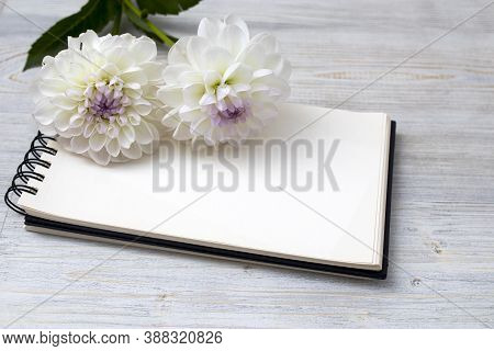 Two White Dahlias On A Gray Background. Copy Space. Empty Space For Text. Spring Notebook
