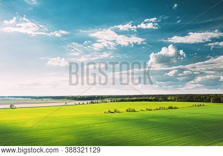 Countryside Rural Green Field Landscape With Young Wheat Sprouts In Spring Summer Cloudy Day. Agricu