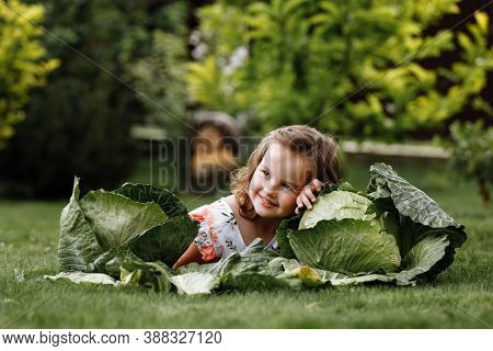 Cute Little Girl Is Having Fun And Lying On Green Grass Near Cabbages. Cute Little Girl On Cabbage F