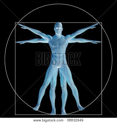 High resolution Vitruvian human or man as concept,metaphor or conceptual 3d anatomy body for biology,anatomical,Leonardo,proportion,medicine,symbol,physiology,skeleton,health,humanity or morphology poster