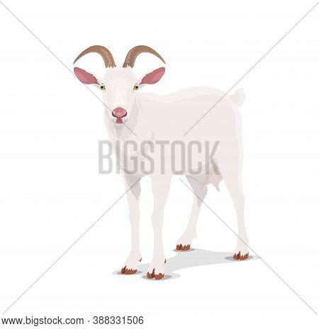 White Goat, Cartoon Vector Nanny, Chinese Horoscope Animal. China Lunar New Year Zodiac Symbol For 2