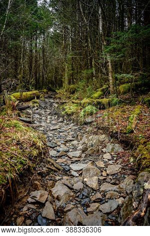 Rocky Trail Flanked By Mossy Forest In Smokies