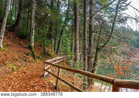 Pathway Through The Forest. Beautiful Autumn Scenery. Wooden Fence Along The Walkway Covered In Fall