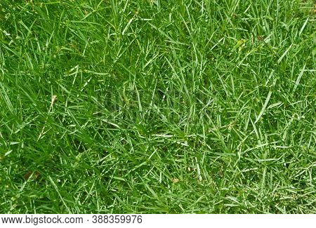 The Dense Green And Lush Grass Can Be A Great Backdrop For A Variety Of Pictures.