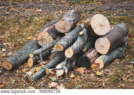 Wooden Logs Of Woods In The Park In Autumn, Stacked In A Pile. Freshly Chopped Tree Logs Stacked Up
