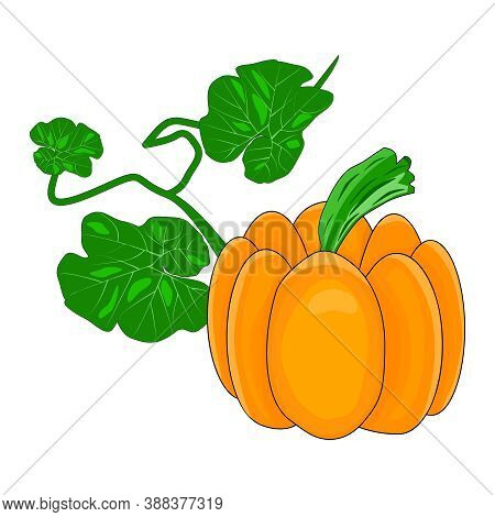 Pumpkin Isolated On White Background. Autumn Orange Squash, Organic Vegetable Food. Pumpkin With Gre