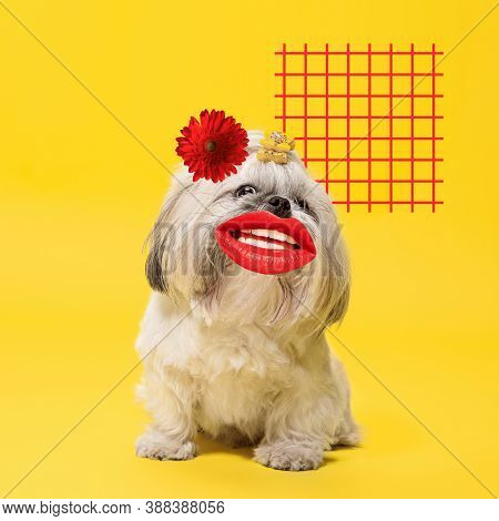 Romantic. Modern Design. Contemporary Art Collage With Cute Dog And Trendy Colored Background With G