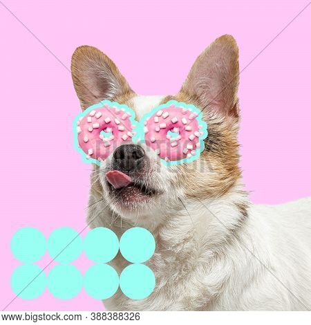 Sweets. Modern Design. Contemporary Art Collage With Cute Dog And Trendy Colored Background With Geo