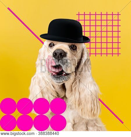 Senior. Modern Design. Contemporary Art Collage With Cute Dog And Trendy Colored Background With Geo