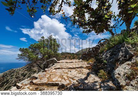 Typical Greek Landscape. Paved Path, Hills, Bushes. Big Olive, Mastic Or Laurel Tree. Blue Sky, Beau