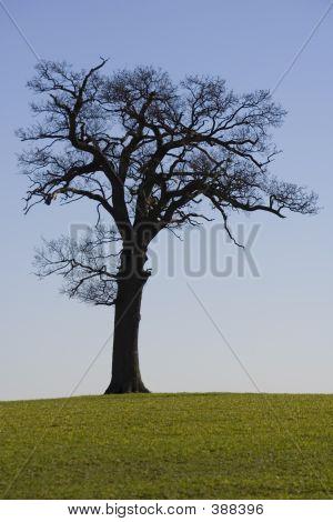 Tree Horizon 1