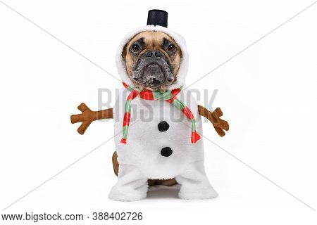 Funny French Bulldog Dog Dressed Up As Snowman With Full Body Suit Costume With Striped Scarf, Fake