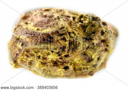 Real Gold Nugget Of Large Size Found In Russia In The Far East, Isolated In White Background, Backgr