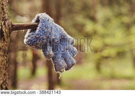 Search For Missing People In The Forest, Concept. A Lost Child Glove On A Tree Branch. Searching For