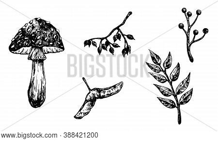 Autumn Forest Botanic Elements. Hand Drawn Fly Agaric Mushroom, Leaves, Branches, Samara And Berries