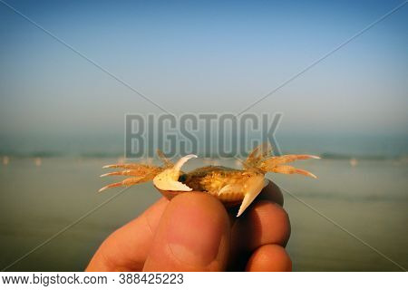 The Summer Idyll And The Evening Calm. Quiet Waves Lapping On The Sand. Crab In Hand On The Backgrou