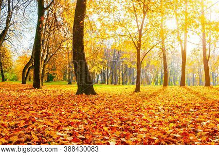Fall landscape. Fall city park, orange fallen leaves on the foreground. Colourful fall October park in sunny fall weather. Fall park landscape scene