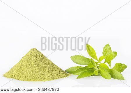 Fresh Green Stevia Herb And Extract Powder - Stevia Rebaudiana.