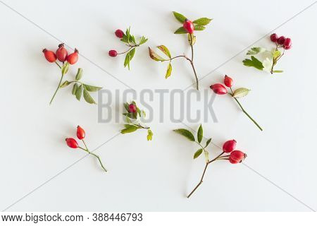Autumn Composition With Red Rose-hips On White Table Background. Fall, Halloween And Thanksgiving De