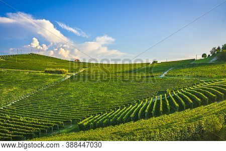 Langhe Nebbiolo Vineyards At Sunset, Barolo, Unesco Site, Piedmont, Northern Italy, Europe.