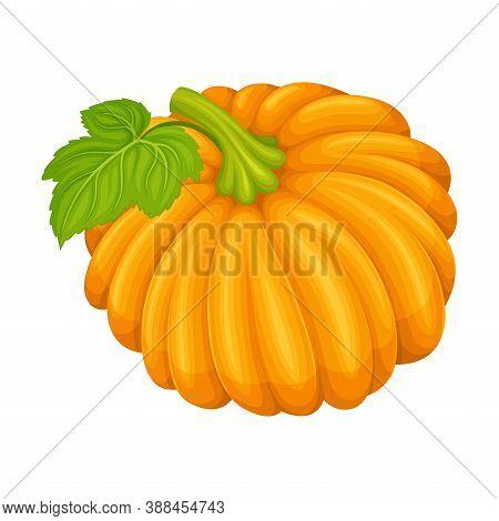 Orange Round Pumpkin With Smooth, Slightly Ribbed Skin Vector Illustration